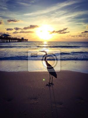 Cigogne, coucher soleil, plage, Floride