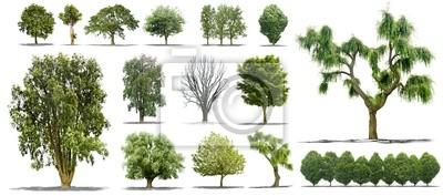 Sticker Collection d'arbres Isolés sur fond blanc