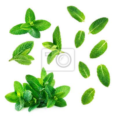 Sticker Collection de feuilles de menthe fraîche isolée sur fond blanc, vue de dessus. Gros plan de menthe poivrée.