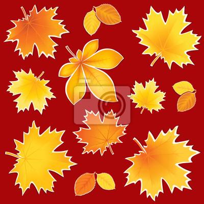 Collection feuilles d'automne