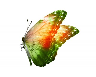 Sticker Color butterfly , isolated on white background
