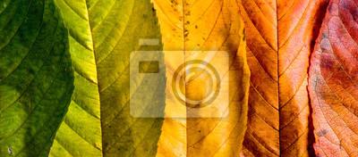 Sticker Composition d'automne, feuilles colorées dans une rangée. Prise de vue en studio.