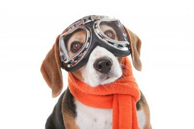 Sticker concept animal familier de vacances, chien de lunettes de vol