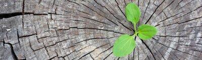 Sticker Concept écologique. Le plantain de germination du vieux bois symbolise la lutte pour une nouvelle vie, une bannière panoramique de conception de bordure.