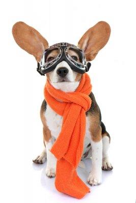 Sticker concept pour Voyage vacances ou animal aviateur