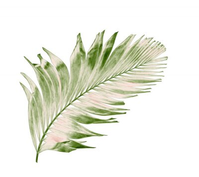 Sticker concept summer with green palm leaf from tropical . frond floral leaves branches tree isolated on white pattern background. flat lay, top view.