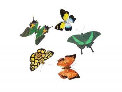 Sticker conception de papillon