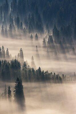 Sticker Conifère, forêt, brumeux, montagnes