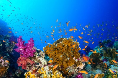 Sticker Coral Reef at the Red Sea, Egypt