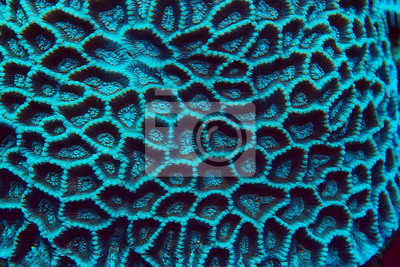 Sticker coral reef macro / texture, abstract marine ecosystem background on a coral reef