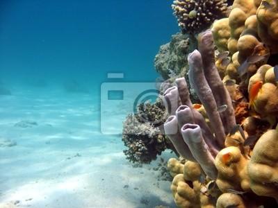 Sticker Coral Tube