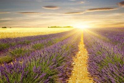 Sticker Coucher de soleil sur les champs de lavande et de blé