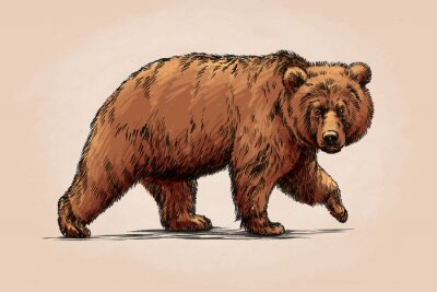 Sticker Couleur graver isolé grizzly ours
