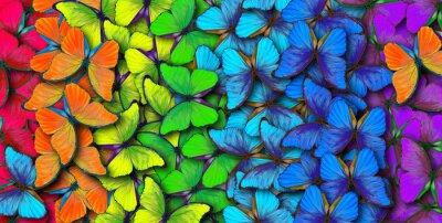 Sticker Couleurs d'arc-en-ciel. Modèle de morpho de papillons multicolores, fond de texture.