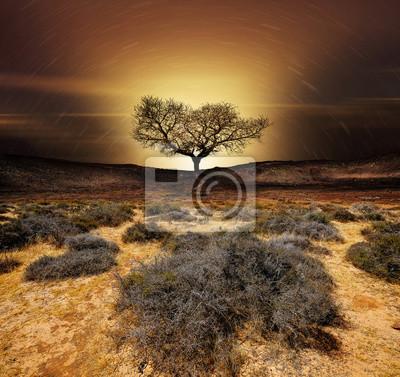 Sticker Cratère volcan arbre silhouette planète sécheresse changement