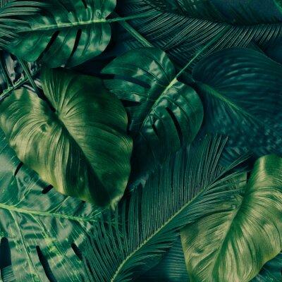 Sticker Création de feuilles vertes tropicales. Concept de printemps de la nature. Plat poser.
