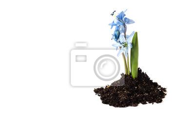 croissance de la plante