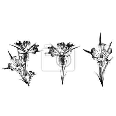 Sticker Croquis De Fleurs Graphiques Vectoriels Monochrome Dessin En