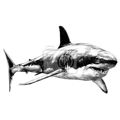 Croquis De Requin Vecteur Graphiques Dessin Noir Et Blanc