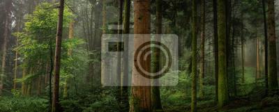 Sticker Dans un sous bois tronc de sapin Avec et sans mousse