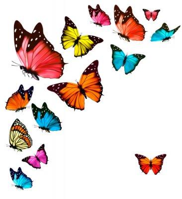 Sticker De fond avec les papillons colorés. Vector.