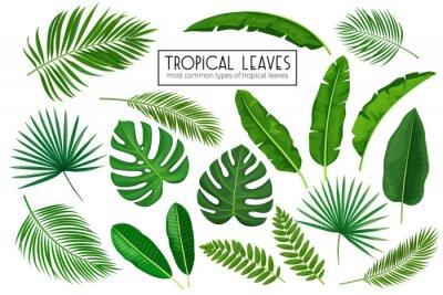 Sticker définir des feuilles tropicales
