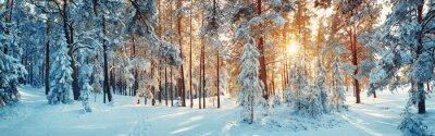 Sticker Des arbres de pin recouverts de neige le soir glacé. Beau panorama hivernal