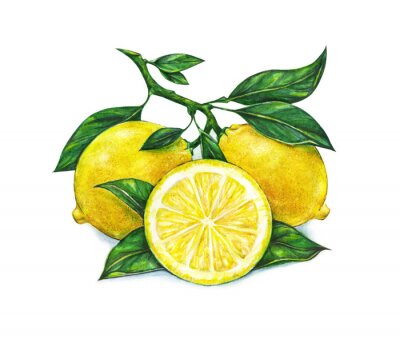 dessin aquarelle de citron