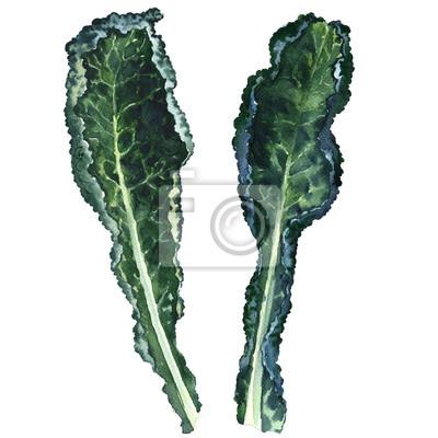 Deux, frais, noir, kale, feuilles, isolé, aquarelle, Illustration