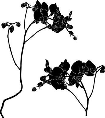 Sticker Deux, orchidée, branches, croquis, blanc