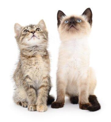 Sticker Deux petits chatons