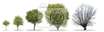 Sticker DIFFERENTES ÉTAPES de la vie d'Un arbre sur fond blanc