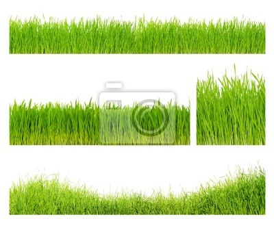 Différents herbe