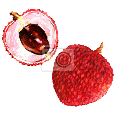 Doux, frais, lychees, fruits, fin, haut, isolé, aquarelle, Illustration