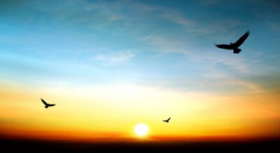 Sticker eagle flying in the sky beautiful sunset