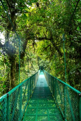 Sticker Eine Brücke im Regenwald au Costa Rica