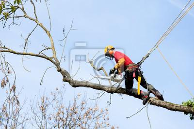 Sticker élaguer arbre non