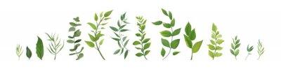 Sticker Éléments de design vectoriel ensemble collection de fougère de la forêt verte, vert feuillage d'art verdure eucalyptus vert naturel laisse des herbes dans un style aquarelle. Illustration élégante de
