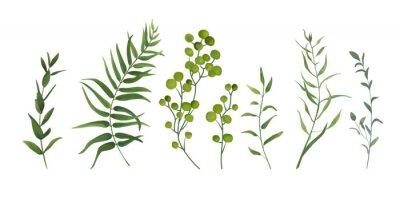 Sticker Éléments de design vectoriel set collection de fougère de la forêt verte, palmier vert vert verdure d'art feuillage naturel laisse des herbes dans un style Aquarelle. Illustration élégante de beauté d