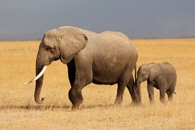 Sticker Éléphant d'Afrique avec un veau, le parc national d'Amboseli