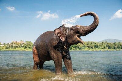 Sticker Éléphant, lavage, rivière