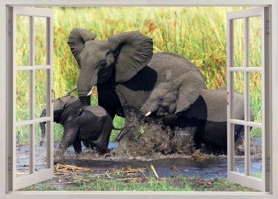 Sticker Éléphants