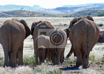 Sticker Éléphants, marche, Damaraland