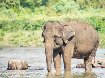 Sticker Elephat