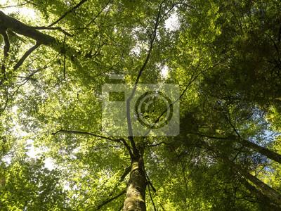 Sticker En forêt. Sous la cime des arbres.