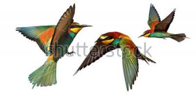 Sticker ensemble d'oiseaux de couleur en vol isolé sur fond blanc