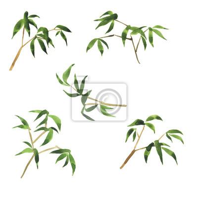 Ensemble de branches de bambou fraîches isolé sur fond blanc. Illustration aquarelle dessinée à la main.