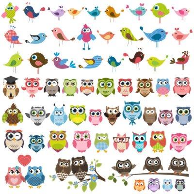 Sticker ensemble de dessins animés oiseaux et hiboux colorés