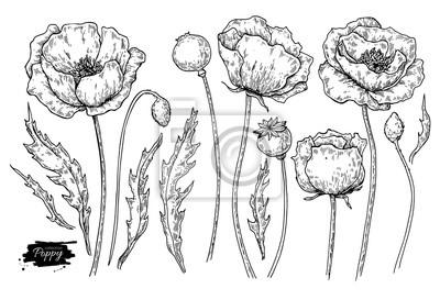 Sticker Ensemble De Dessins Vectoriels De Fleurs De Pavot Plantes Sauvages