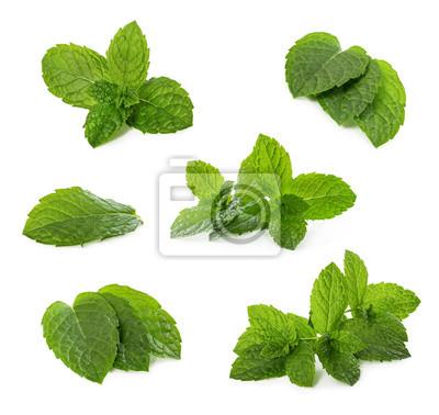 Sticker Ensemble de feuilles de menthe fraîche isolé sur blanc